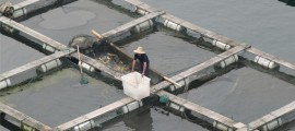 fish-farm-mf1