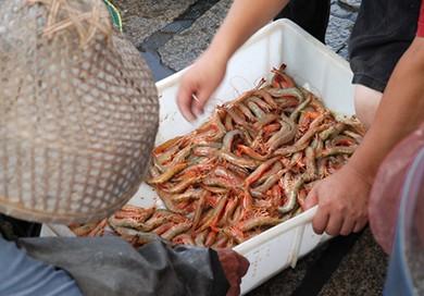 http://www.dreamstime.com/stock-photos-raw-shrimp-basket-fishing-port-image49541723